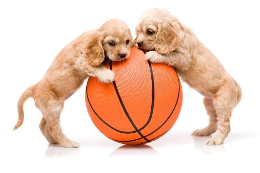 Qual é o melhor brinquedo para cães