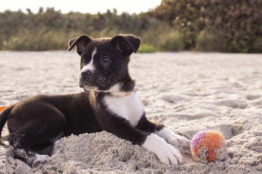 Quais-são-os-perigos-para-o-teu-cão-na-praia