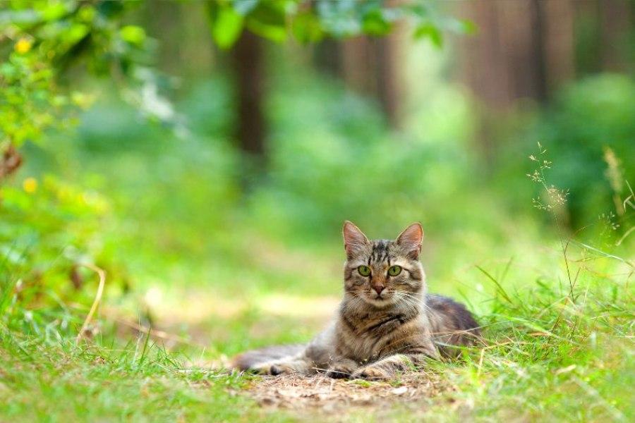 As carraças em gatos