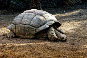 as-tartarugas-devem-hibernar