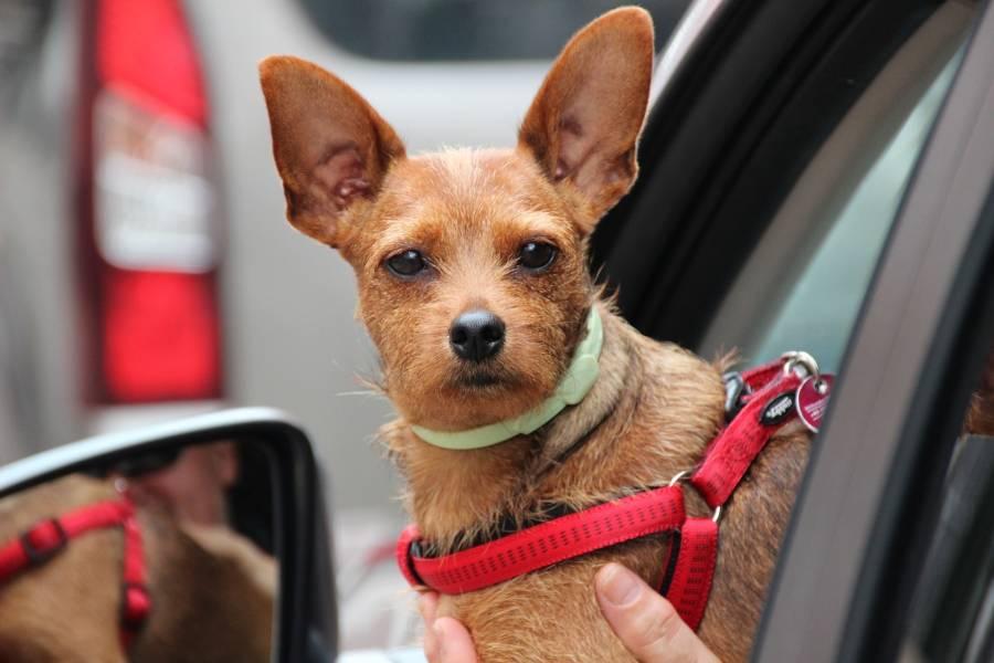 Como-ensinar-a-usar-a-caixa-de-transporte-ao-teu-cão