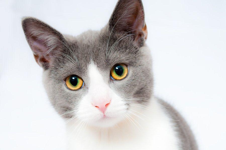 Como escolher o tipo de areia adequada para o teu gato