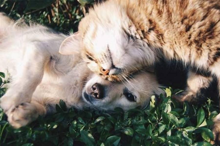 Qual é o melhor desparasitante para cães e gatos