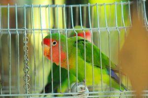 Como preparar uma gaiola para aves bem equipada