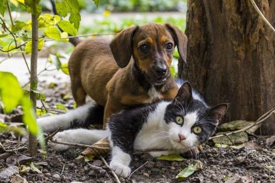 Educação e comportamento de um cachorro ou um gatinho