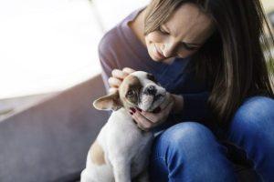 Leptospirose canina_ sintomas e tratamento
