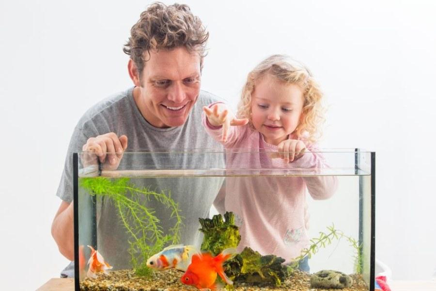 Cuidados para um aquário natural