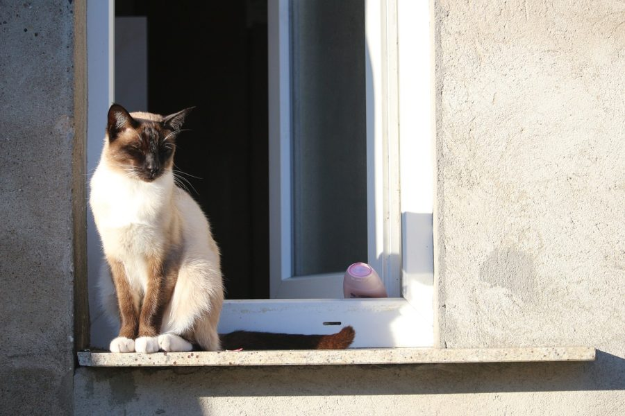 Os gatos e as janelas