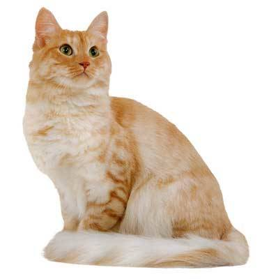 Hill's sterilised cat mature adult frango