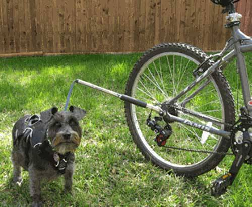 Walky dog Low rider