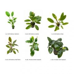 .Plantas Naturais para Aquários Conjunto 19