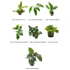 .Plantas Naturais para Aquários Conjunto 21