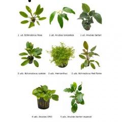 .Plantas Naturais para Aquários Conjunto 22
