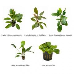 .Plantas Naturais para Aquários Conjunto 23