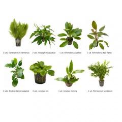 .Plantas Naturais para Aquários Conjunto 25