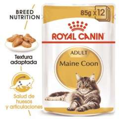 Royal Canin Maine Coon húmido para gatos