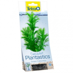 Plantas decorativas para aquários Cabomba