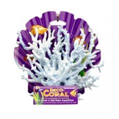 Coral azul para aquários