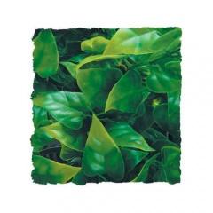 Plantas artificiais: Phyllo Mexicano