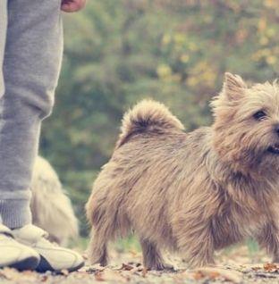 Benefícios de ter cães e crianças em casa