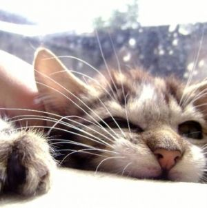 Por que é que o meu gato me morde? – Parte I